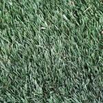 Staranne odchwaszczanie trawnika